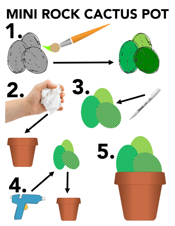 rock cactus pot infographic